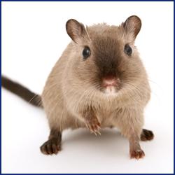 子どもやペットがいる場合のネズミ駆除は注意が必要!