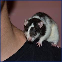 ネズミ対策としてできることは?