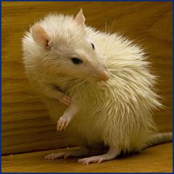 ネズミ駆除業者を利用した方の体験談