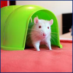 ネズミが住みついている家の特徴とは?