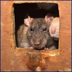 ネズミの侵入経路はどこ?