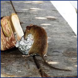 悪質ネズミ駆除業者の特徴